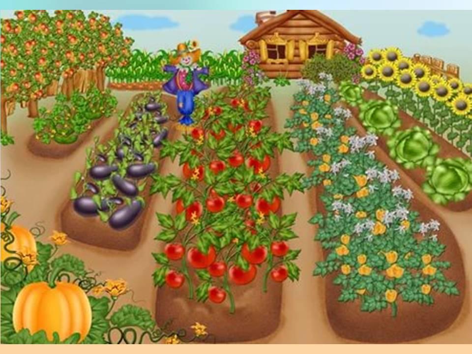 Что такое огород?  Овощей хоровод.  Дыни сладкие,  Помидоры гладкие.
